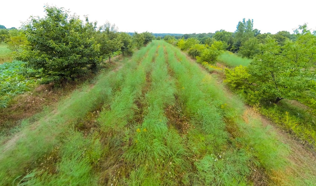 New-Forest-Farm-Drone-Fly-By-crop[1]